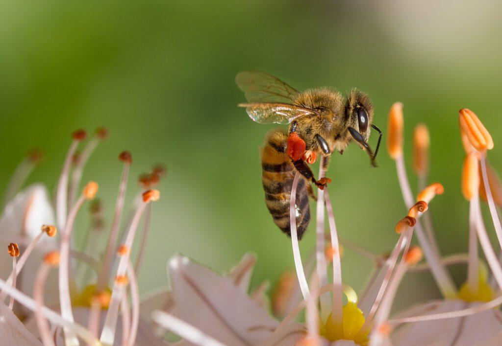 Biene Frühling Pollenflug