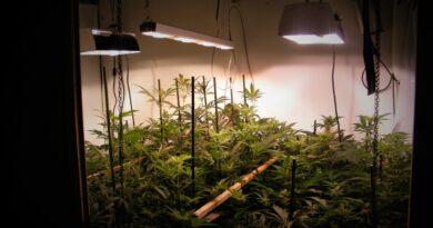 Professionell ausgestattete Marihuana-Plantage entdeckt
