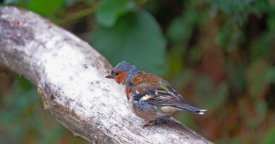 Online in die Welt der Vögel eintauchen